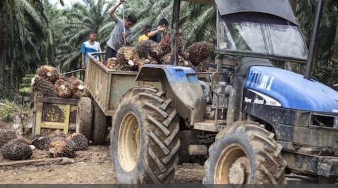 Palm oil, Russian fighters and the European Parliament